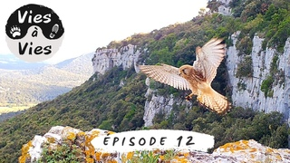 Episode 12 : Novembre, du rififi dans la falaise