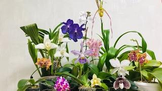 Орхидеи, цветения июля.