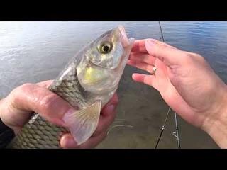 Рыбалка на Оке, выше Каширы, голавль, подуст, подлещик, густера