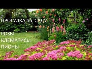 САД в  мае!!!  Зацветают РОЗЫ, да как ОБИЛЬНО!!! Прогулка по майскому саду просто РЕЛАКС