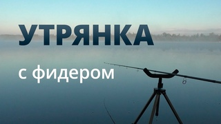 Утрянка на фидер — #OmskFish
