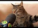 😸 Главные кошки страны! 🐈 Подборка смешных кошек и котят для хорошего настроения! 😸