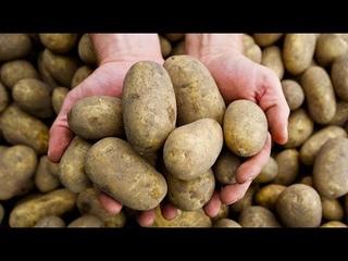 День Люди События. 28 июля.В Англию впервые привезены клубни картофеля