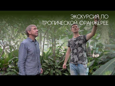 Экскурсия по тропической оранжерее в Аптекарском огороде