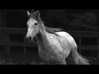 Клип лошади. Наргиз - Нас бьют - мы летаем
