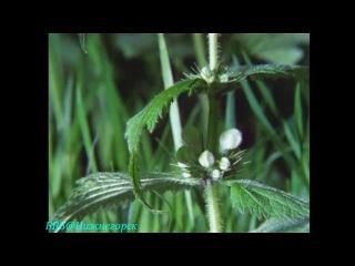 BBC Невидимая жизнь растений 2 Растущий Документальный 1995