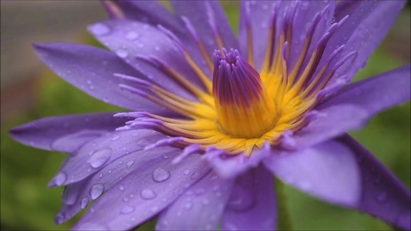 Прекрасная музыка согревающая сердце и душу Послушайте Дождь и солнце