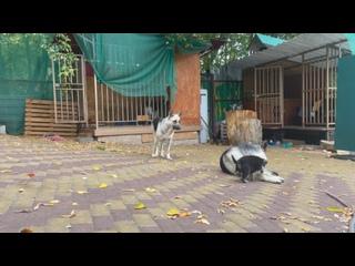 Видео от Алины Бабкиной
