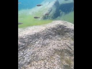 Video by ANDREY PIMONIHIN