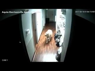 Пёс сбежал из приюта для животных, мастерски открыв двери