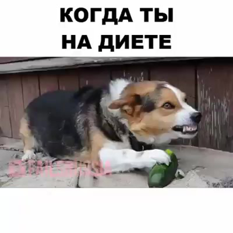 МОЙ ОГУРЕЦ