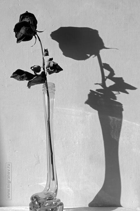 фото из альбома Waldemar De-Sombre №13