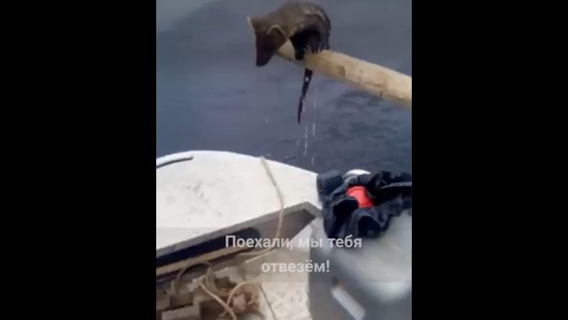 Видео от Газета Наш город Заринск