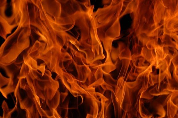 В Брянской области сожгли 1300 кустов коноплиhttps...