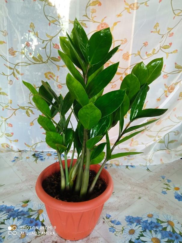 Здравствуйте, дорогие любители растений!!!