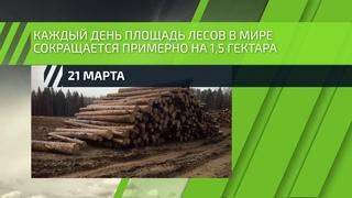 21 марта - Всемирный день защиты лесов