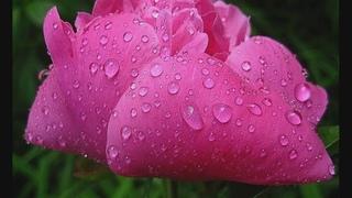 Музыкотерапия - Вальс дождя (Шопен)